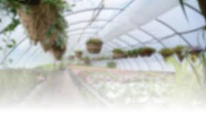 sound native plants home brackenrig nursery muskoka u0027s gardening center