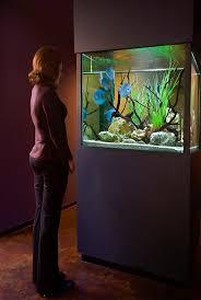 64 best aquarismo images on pinterest aquarium ideas aquarium