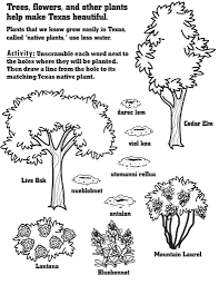 texas native plants native plant activities for kids take care of texas