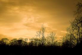 Bright Color Setting Free Images Landscape Tree Nature Forest Branch Silhouette