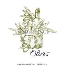 sketch olives olive oil bottle pitcher stock vector 618285959