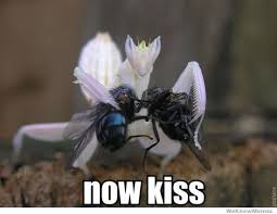 Now Kiss Meme Generator - now kiss weknowmemes