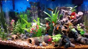 decoration delightful colorful fish tank for home interior