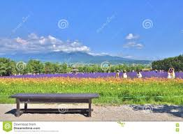 wooden bench in front of rainbow flower field editorial photo