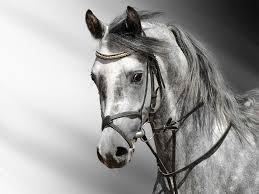 horse wallpaper hd download animals wallpaper