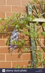 garden climbing frames for plants nz best frames 2017