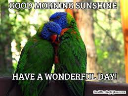 Good Morning Beautiful Meme - 32 good morning memes for her him friends funny beautiful