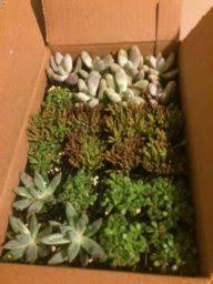 amazon succulents 10 inch rectangular modern minimalist white ceramic succulent