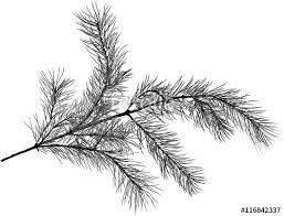 sketches for tree limb sketch www sketchesxo com