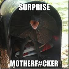 Suprise Mother Fucker Meme - surprise motherfucker teh funniez pinterest funny pix memes