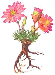 flower roots cliparts 210301