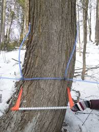 maple syrup production crop report for february 3 to 9 2014