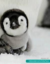 Cute Penguin Meme - cute penguin archives daily paws daily paws