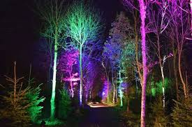 enchanted forest of light tickets woodland set to light up for magical enchanted forest event