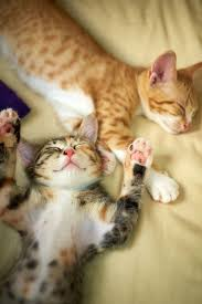 436 best happy cat images on pinterest animals kitty cats and
