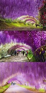 japan flower tunnel 15 unbelievable places we resist really exist wisteria flower