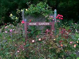 Botanical Gardens Golden Gate Park by The Golden Gate Park Rose Garden In San Francisco