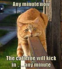 Funny Coffee Memes - top 30 funny coffee memes funny coffee coffee and caffeine