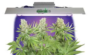 cheap grow lights for weed energy efficient marijuana grow lights oregon appropriate green