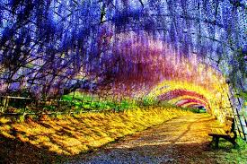 japan flower tunnel you won t believe these tree tunnels coexist in today s concrete world