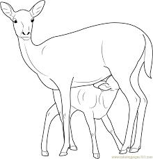 mother baby deer coloring free deer coloring pages