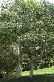 here s what you need to before planting a tree fort worth