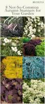 77 best ferns images on pinterest gardening balcony gardening