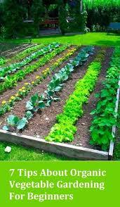 beginners gardening 10 tips on vegetable gardening for beginners