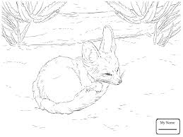 coloring pages for kids bat eared fox mammals foxes