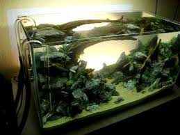 aquascaping layouts with stone and driftwood my new layout second day after setup youtube