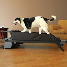 treadmill for dogs the green