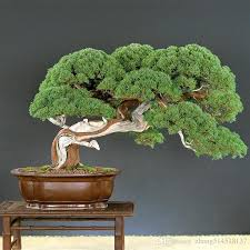 japanese bonsai trees price comparison buy cheapest japanese