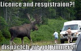 Moose Meme - these 7 moose pictures will make you laugh number 7 is true i