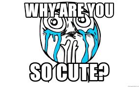 So Cute Meme - why are you so cute so cute meme meme generator