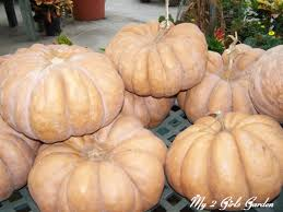 thanksgiving in french how do you say pumpkin in french best pumpkin 2017