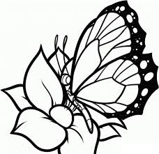 image monarch butterfly coloring cartoon butterfly
