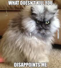 Pissed Meme - 75 best pissed off cat memes images on pinterest ha ha angry