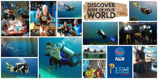 the dive bus curaçao padi open water diver course the dive bus