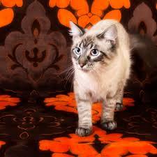 Photographers Indianapolis Razberri Photography Indianapolis Pet Photographers Razberri