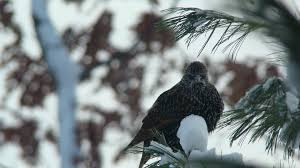 michigan backyard feeder birds album on imgur