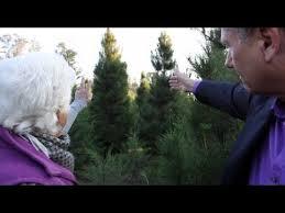 christmas tree farm cut your own christmas tree modesto