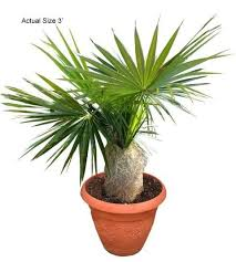 70 best small plants and palm trees images on