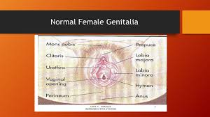 Hymen Female Anatomy Male Created By Joanna Shedd Ms Cns Rn Ppt Download