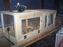 image result for quail cage fowl play pinterest quails