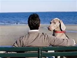 pet cremation nj onsite cremation helping you remember your cherished pet pet