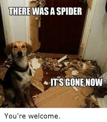 funny welcome there was a spider it s gone now you re welcome funny meme on me me