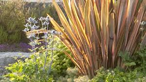 5 surprising ways to landscape with ornamental grass