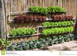 hydroponic vegetable garden gardening ideas