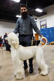 afghan hound westminster national dog show at the greater philadelphia expo center 20