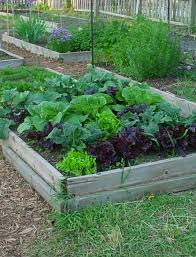 fall raised bed vegetables gardens are you looking for the best
